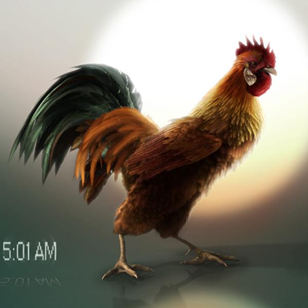 rooster3.jpg