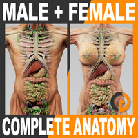 3d human male female complete