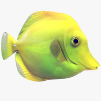3ds max yellow tang tropical fish