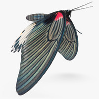 maya mormon butterfly animation