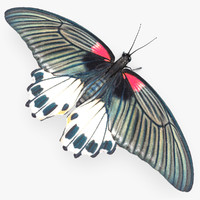 3d model of mormon butterfly