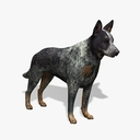 Australian Cattle Dog 3D models
