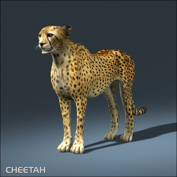 3d cheetah lion tiger - Cheetah... by Massimo Righi