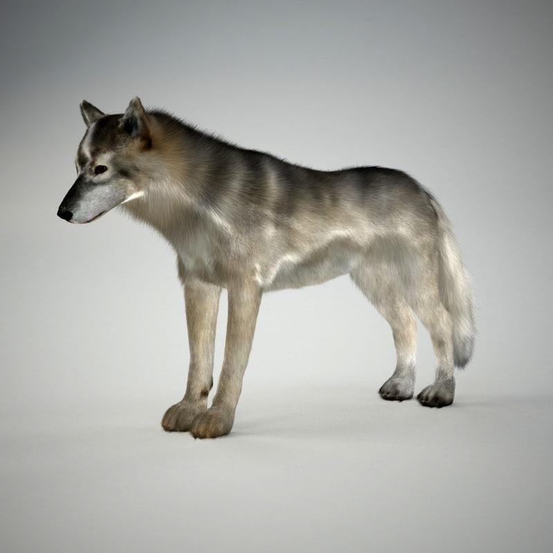 wolf+grey.jpg