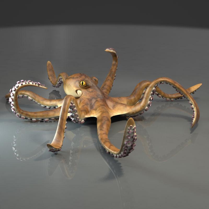 octopus0062.jpg