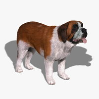 maya saint bernard dog