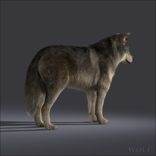 wolf fur 3d model - Wolf (FUR)... by Massimo Righi