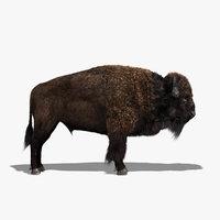 Bison (FUR)