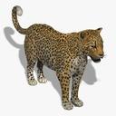 leopard 3D models