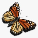 Monarch Butterfly 3D models