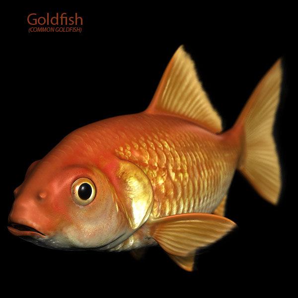 Fish goldfish 3d obj for Golden fish pipe