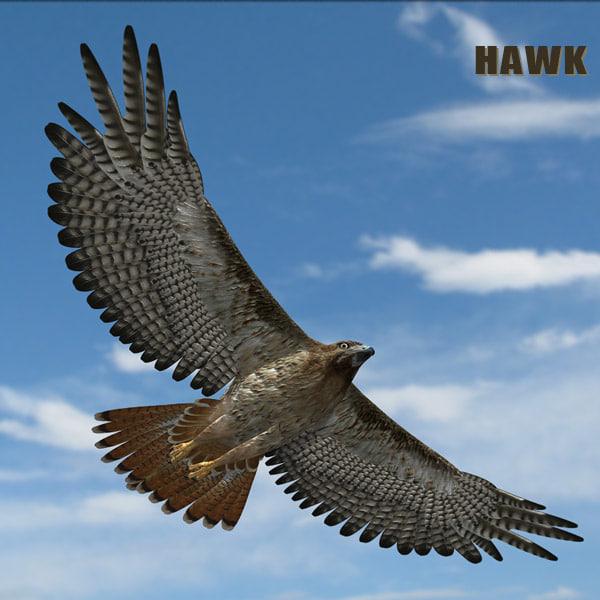hawkHD6.jpg