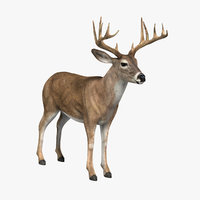 deer white 3d model