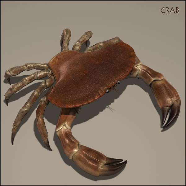 crabHD01.jpg