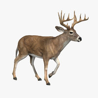 Deer (ANIMATED)