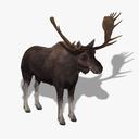 Moose 3D models