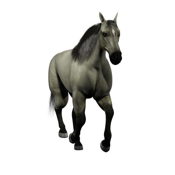 Free Pictures Of Animated Horses Download Free Clip Art