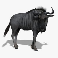 wildebeest rigged fur 3d model