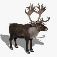 3d reindeer fur