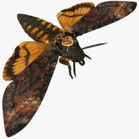 3d acherontia atropos death hawkmoth model