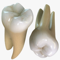 Second Molars