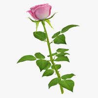 rose 10 3d model