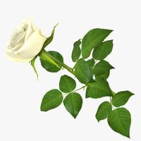 rose 14 3d obj