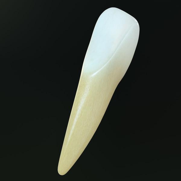 how to make human teeth model
