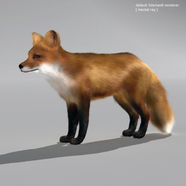 red fox 3d model - Fox... by QLEE