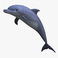 3d max dolphin
