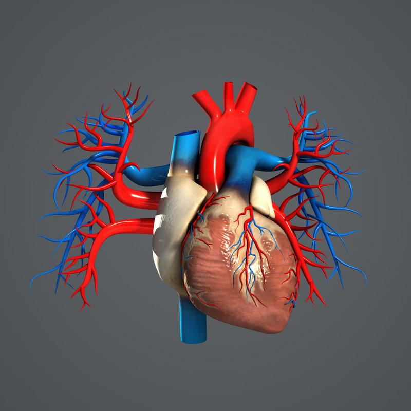 Heart_Turbosquid_02.jpg