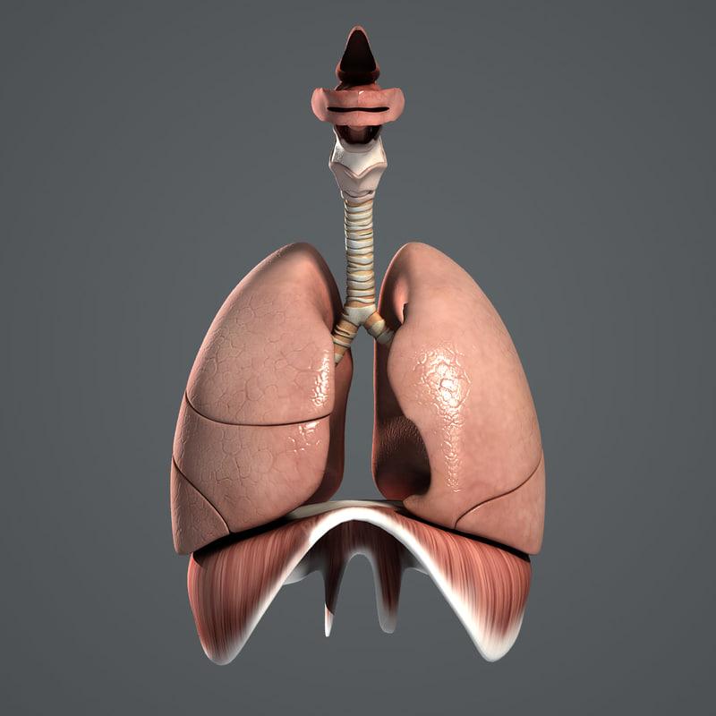 Respiratory_Turbosquid_02.jpg