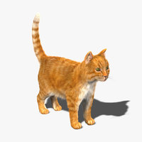 Cat (Orange Tabby) (FUR)