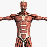 Muscular & Skeletal System Anatomy Pack (Textured)