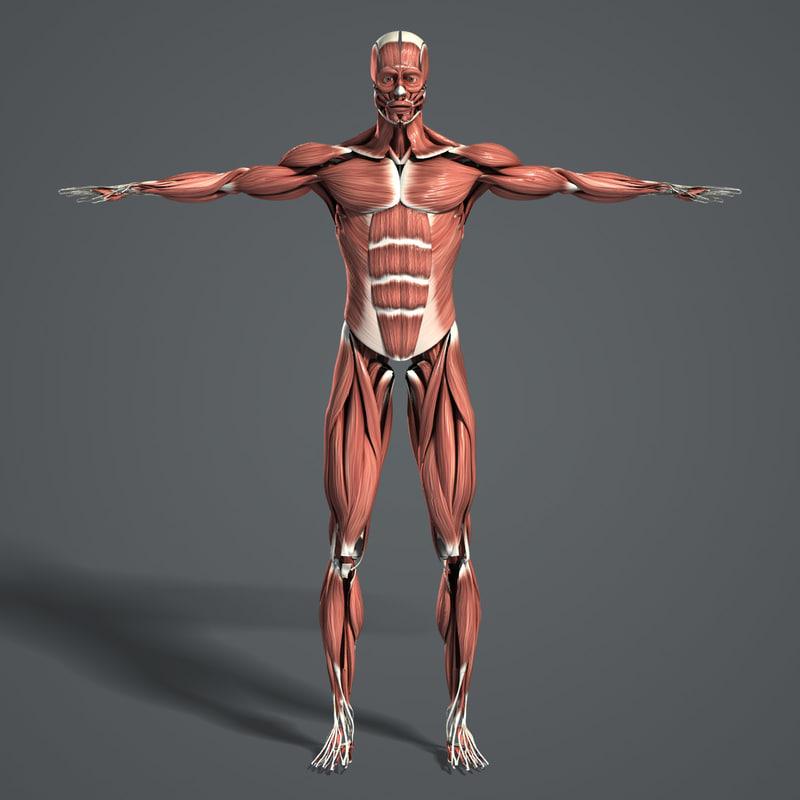 Muscles_Turbosquid_02.jpg