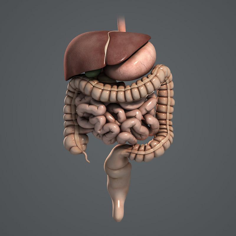 Digestive_Turbosquid_02.jpg