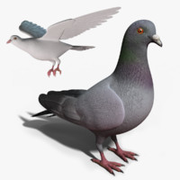 Pigeon - Rigged & Animated Bird