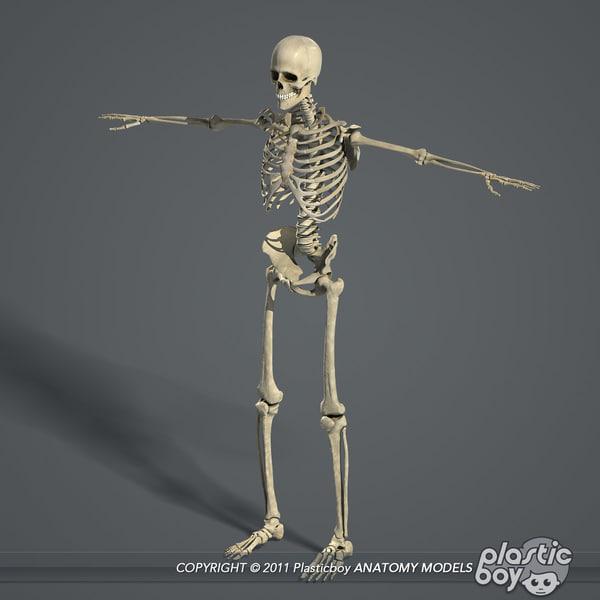bone animation software