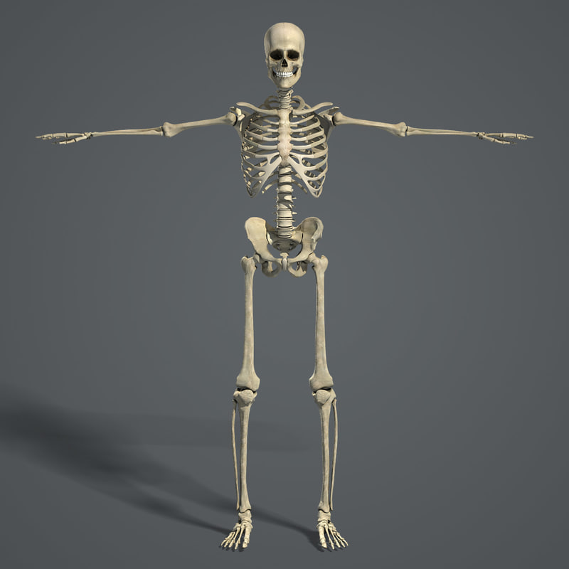 Skeleton_Turbosquid_02.jpg
