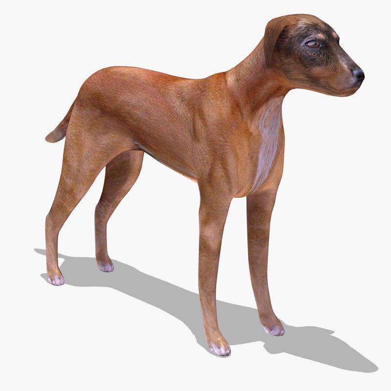 Dog_Stray_MR_Cam01.jpg