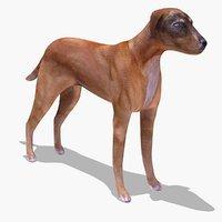 maya stray dog