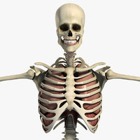Male Respiratory Skeletal 3D Model Pack (Textured)(1)