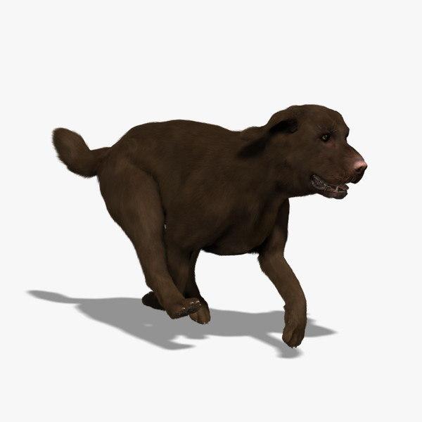 Labrador - Chocolate (FUR) (ANIMATED)