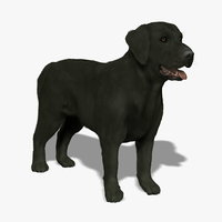 Labrador - Black (FUR)