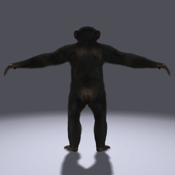 chimp fur 3d ma - Chimp (FUR)... by Massimo Righi