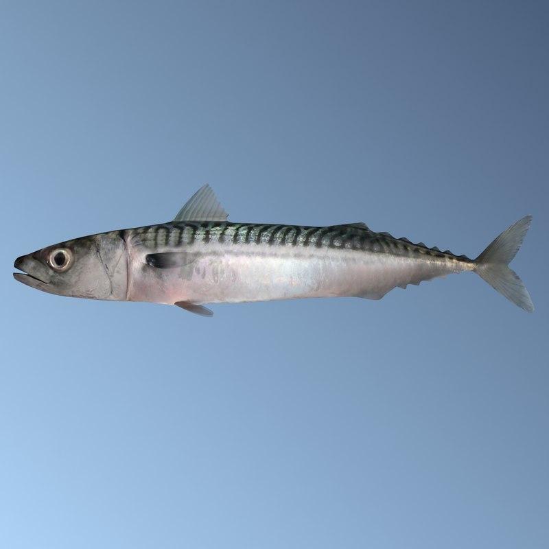 mackerel2s.jpg