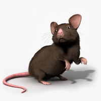 mouse rigged - max