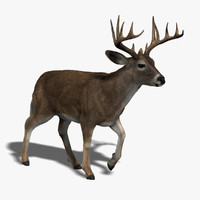 3d deer fur animation model