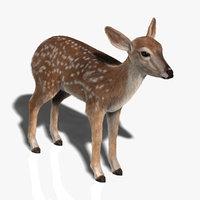 fawn fur 3d model