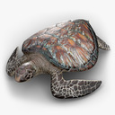 sea turtle 3D models